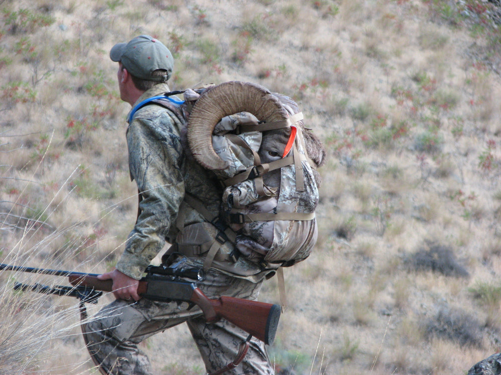 Bighorn Sheep on a Beta Test Orion back pack