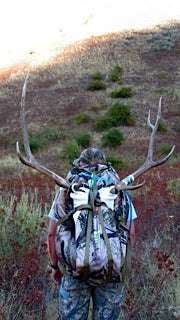 Bull Elk Rack on Greengate pack