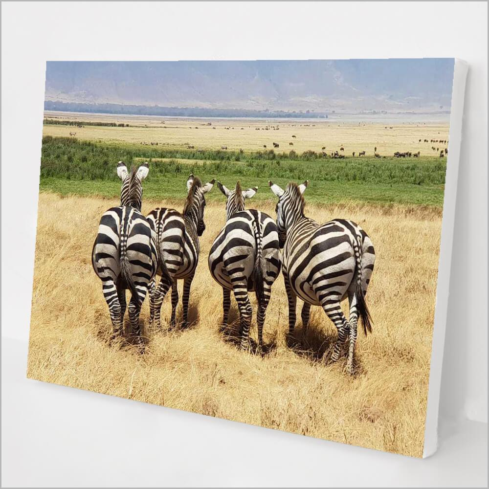 Zebras in Africa kit
