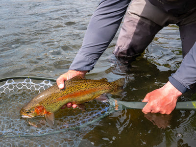 Deschutes Redside trout and the net choice of Fin & Fire guides.