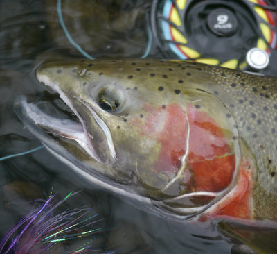 The Hatch Finatic 9 is a true Oregon Winter steelhead workhorse.