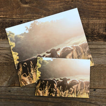Load image into Gallery viewer, Backlit Heifers Print