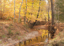 Load image into Gallery viewer, Creek Dressed in Fall Print