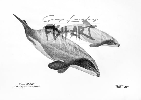 Maui Dolphins - LIMITED EDITION 21 ONLY