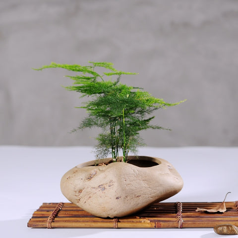 Bonsai Stone Planter