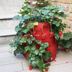 Multi Pockets Potato Strawberry Planter Bag Balcony Herbs Vegetables Home Garden Outdoor