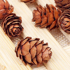 10 Pcs Real Natural Small Pine Cones for Christmas Craft Decorations