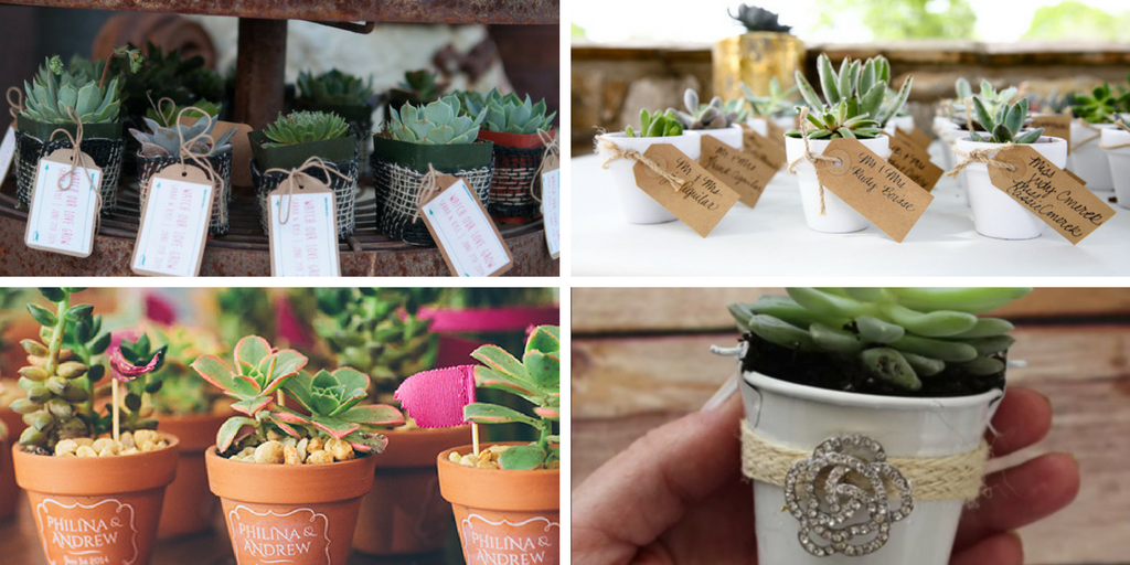 23 wedding favors - succulents