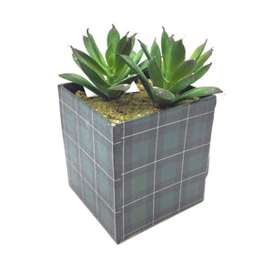 Boxed Succulent - Country Cottage Gifts