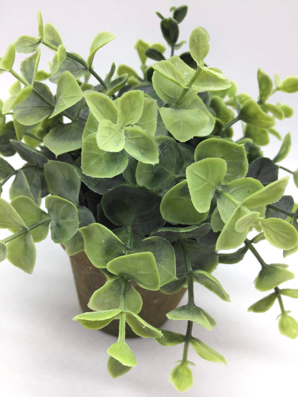Terra Cotta Greenery - Country Cottage Gifts