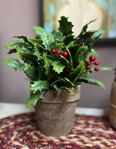 Potted Holly