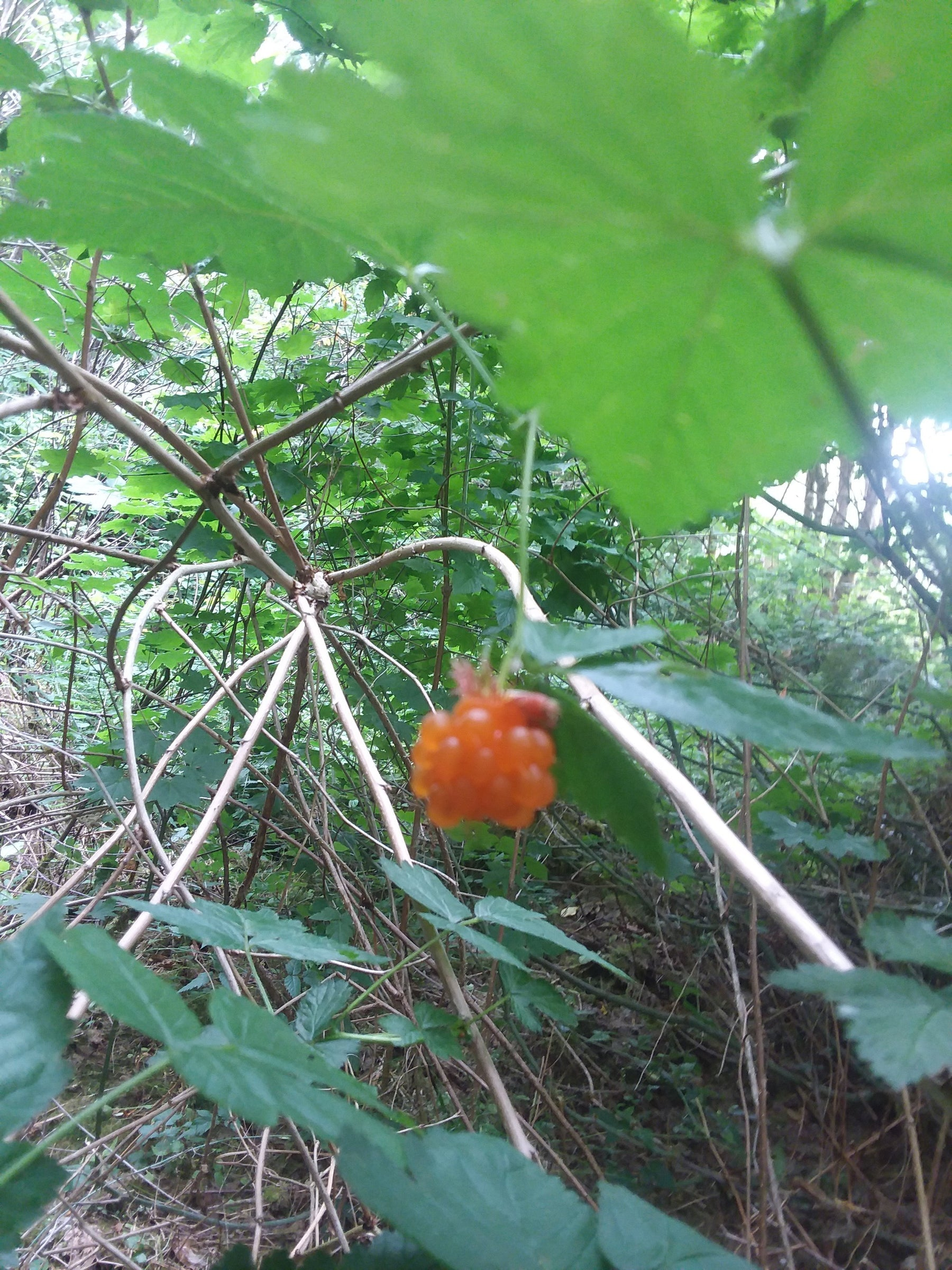 Pacific Northwest Edible Fruits