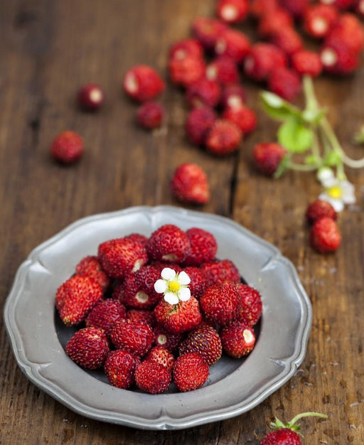 Rugen Alpine Strawberry