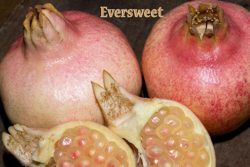 Eversweet Pomegranate