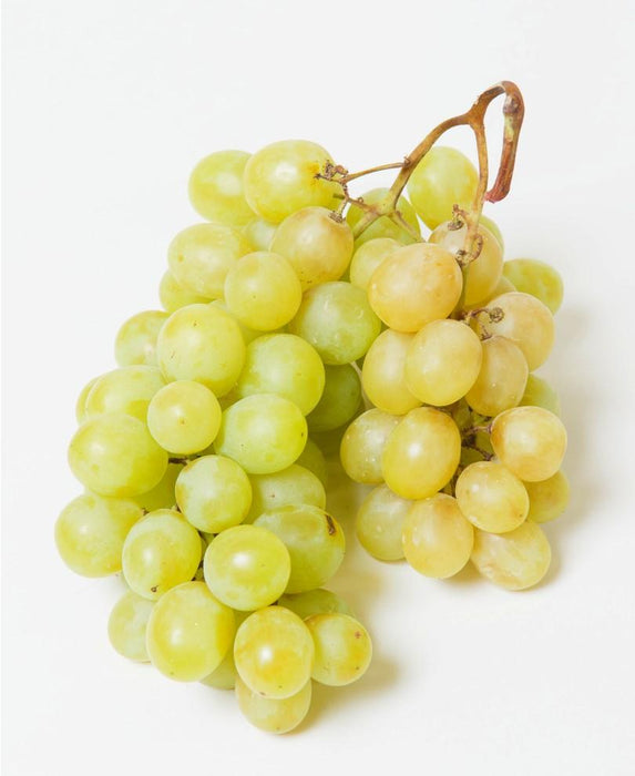 Himrod Seedless grape