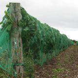 Vineyard Drape Netting 50ft Length