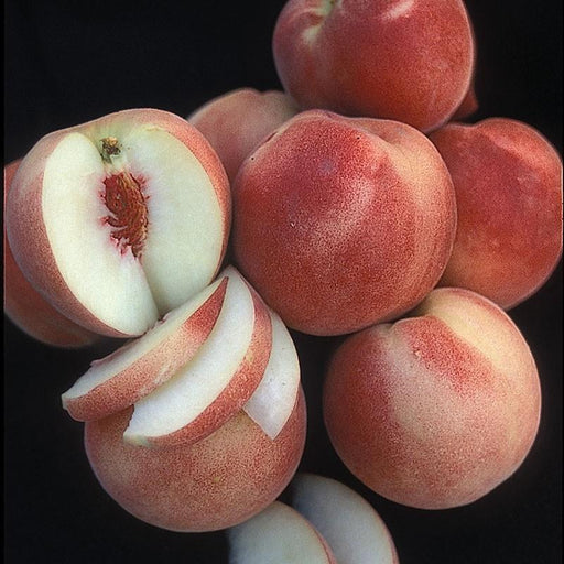 White Lady Peach
