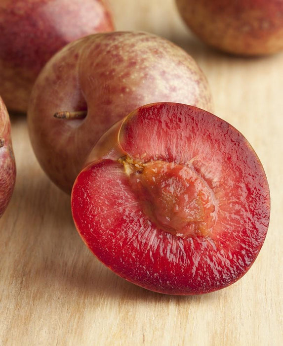 Combo Zee Sweet Pluot Tree (3 varieties)