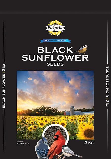 Black Sunflower Seed Sunflower Seeds Picardie