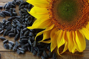 Black Oil Sunflower Seeds 18kg Sunflower Seeds KB Depot Express