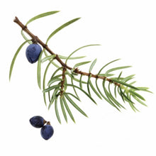 Load image into Gallery viewer, Juniper Berry