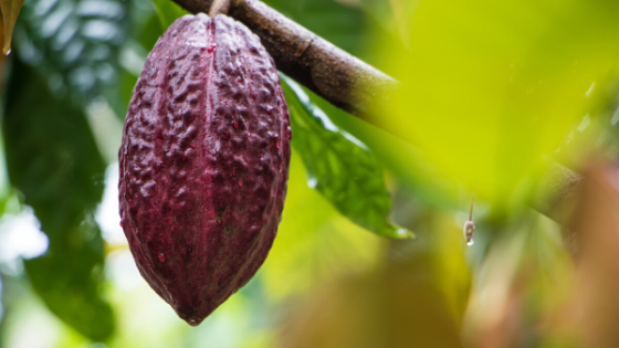 Cacao and heavy metals - everything you need to know
