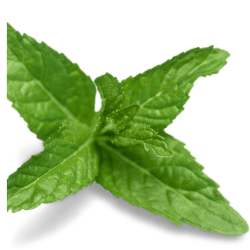 Lemon Balm Extract 60mg (equiv. to fresh 600mg)