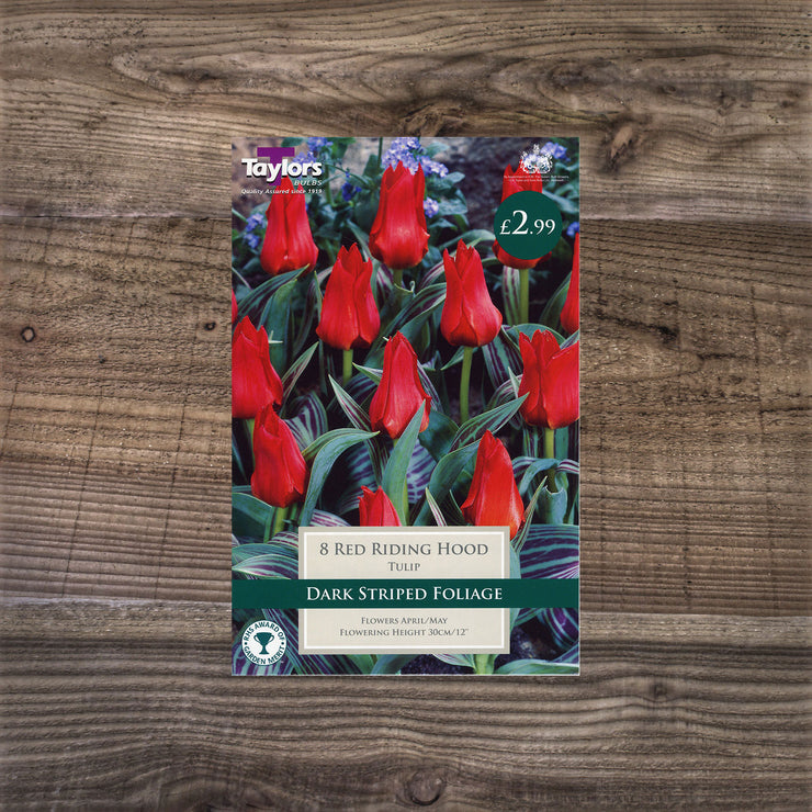 Tulip 'Red Riding Hood'