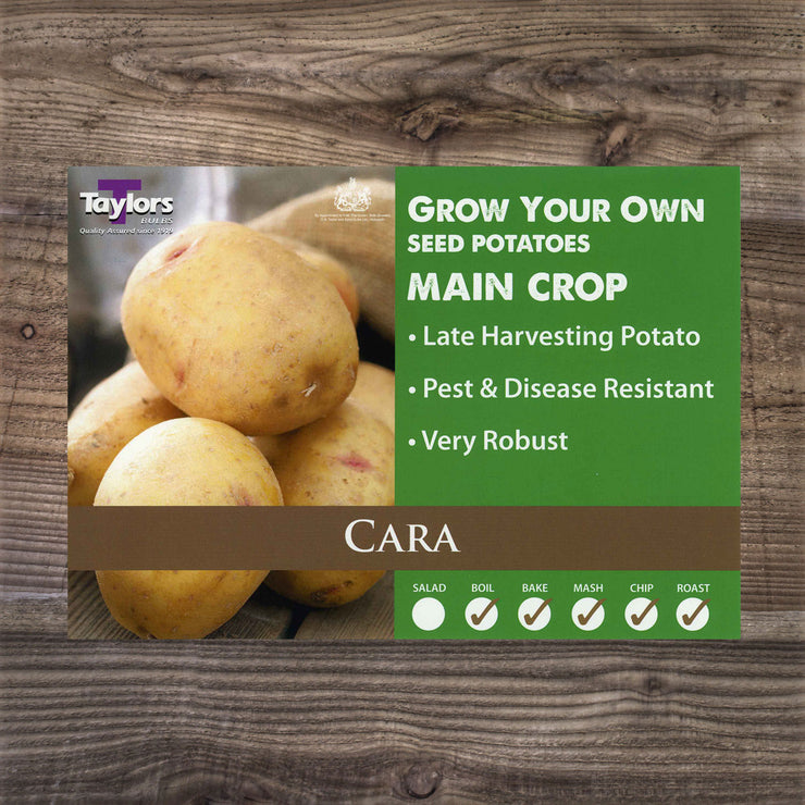 Cara, Basic Seed Potatoes