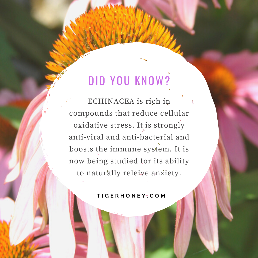 tigerhoney echinacea benefit
