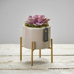 Chic Pink Echeveria Planter
