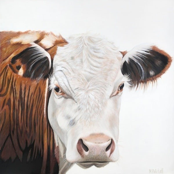 Amos Cow Art Prints, with every sale of this art print, 100% profit goes to Paws Awhile Animal Sanctuary in Raglan