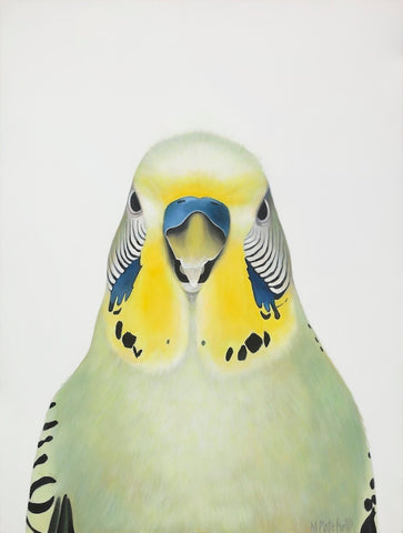 green budgie, art print, quirky birds, colourful bird art