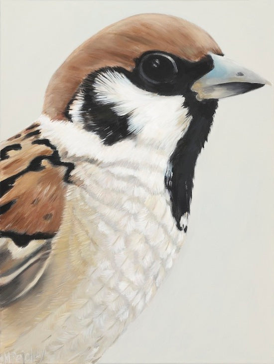sparrow portrait, nz sparrow bird art print