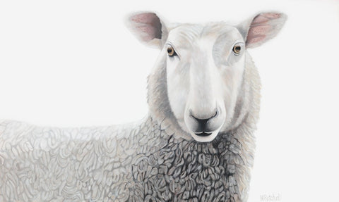 New Zealand sheep portrait , fine art print, familiar NZ farm animals