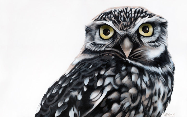 owl art print , new zealand native birds
