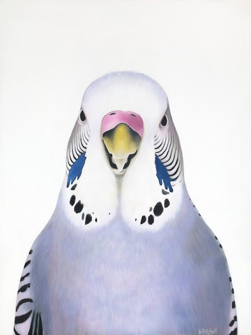 budgie art print , limited edition bird portrait, budgie art, lilac, purple budgie
