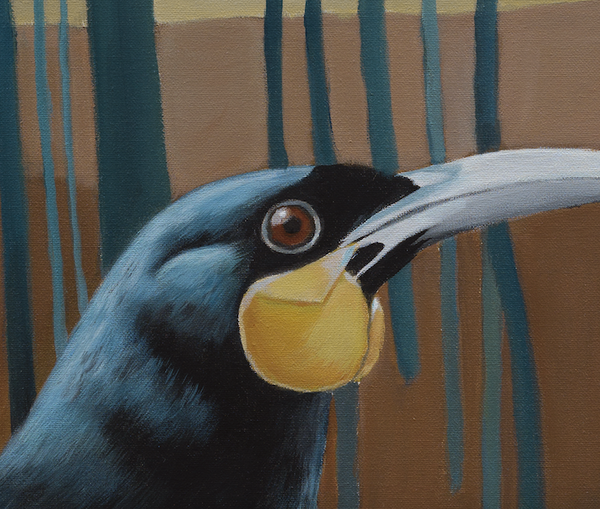 """Douglas"" Huia in Trees"