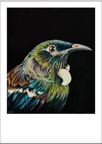 "NZ  Tui Art Print ""Norton"""