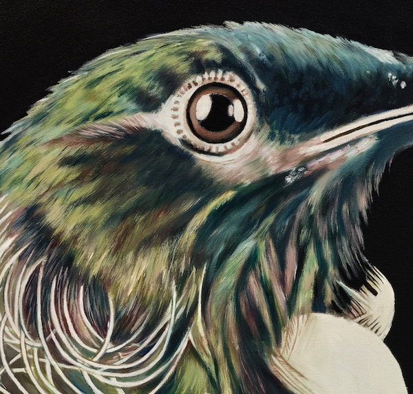 new zealand tui art print close up details