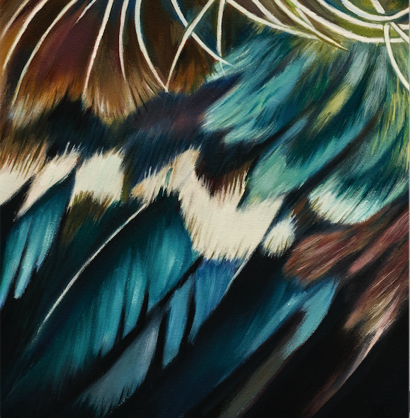 NZ tui art print close up detail of colourful feathers, parson bird