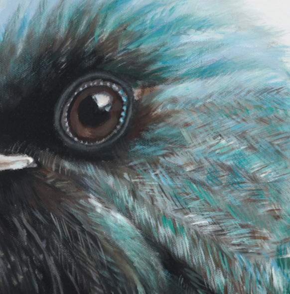 NZ Tui art print  detail