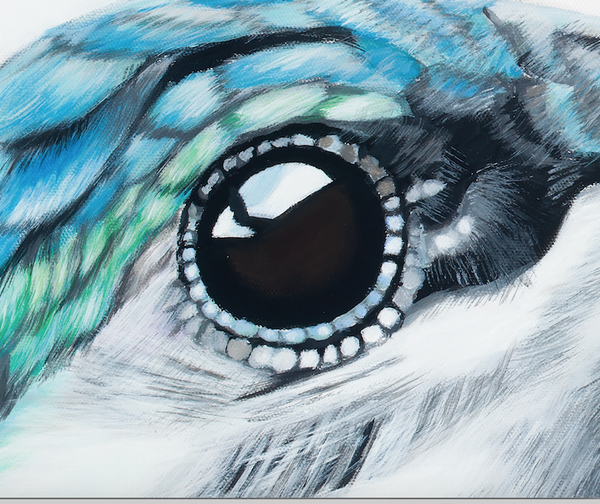 hummingbird eye detail
