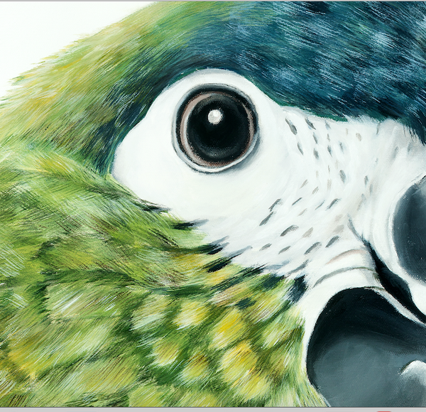 green parrot close up face detail, fine art print