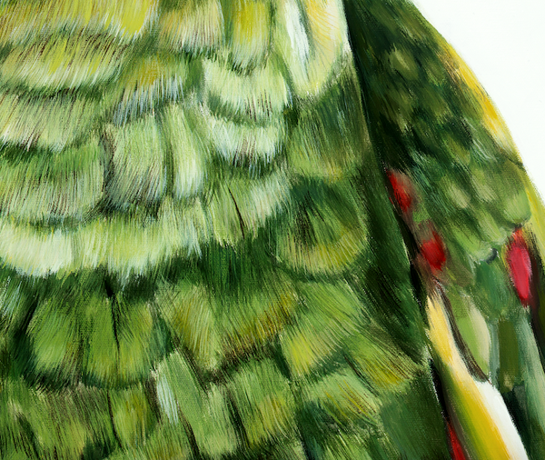 feather texture and details green parrot art print