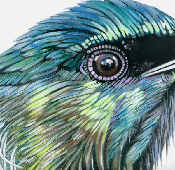 tui feathers close up detail