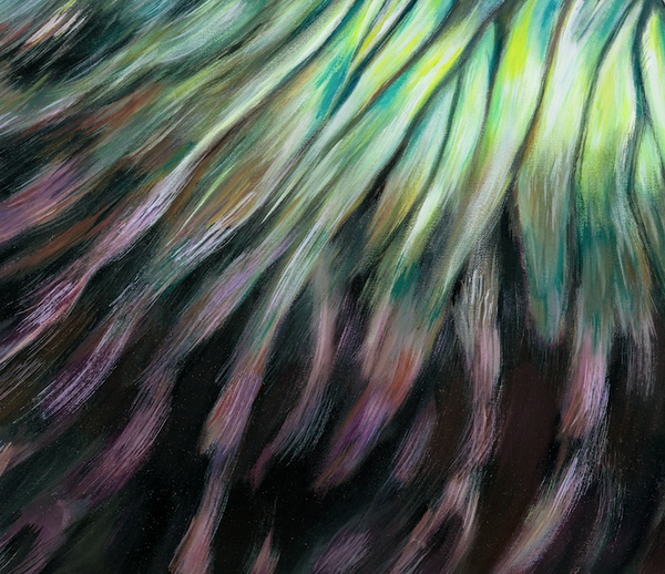 Tui feather texture, close up detail
