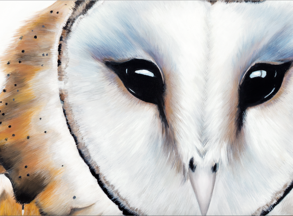 "Owl Painting "" Snowden"""