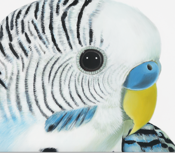 up close detail, budgie head, budgie face. bird art prints for your home