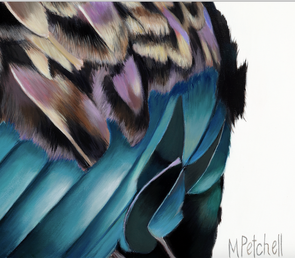 "New Zealand Tui Art Print ""Jefri"""